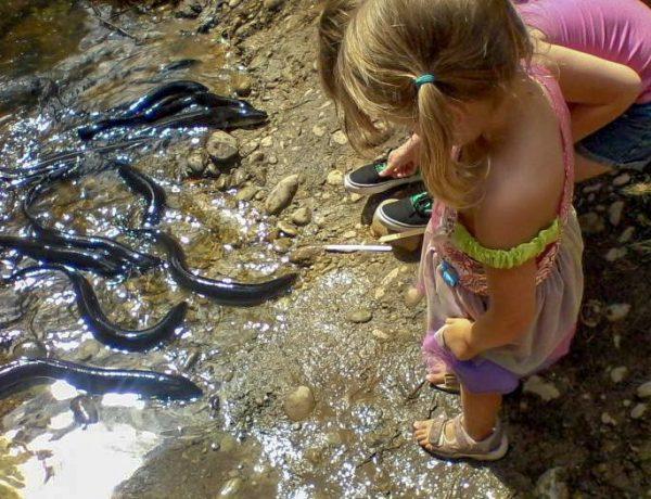 feeding-eels-700--